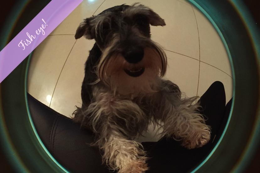 blog fish eye perro