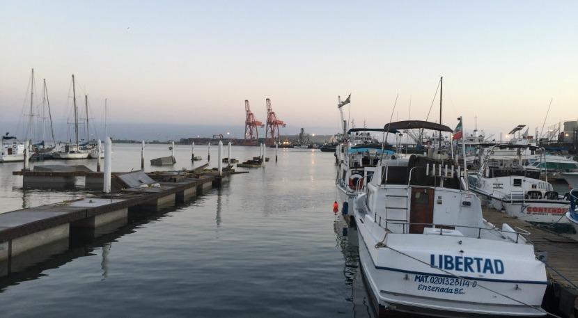 puerto de ensenada baja california lobos marinos